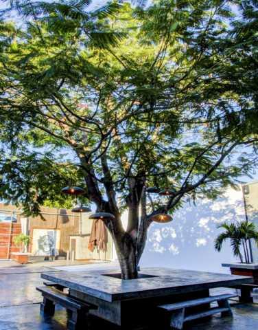 MAPS Backlot Tree